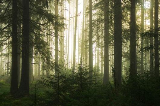 skog_dimma2 [1]